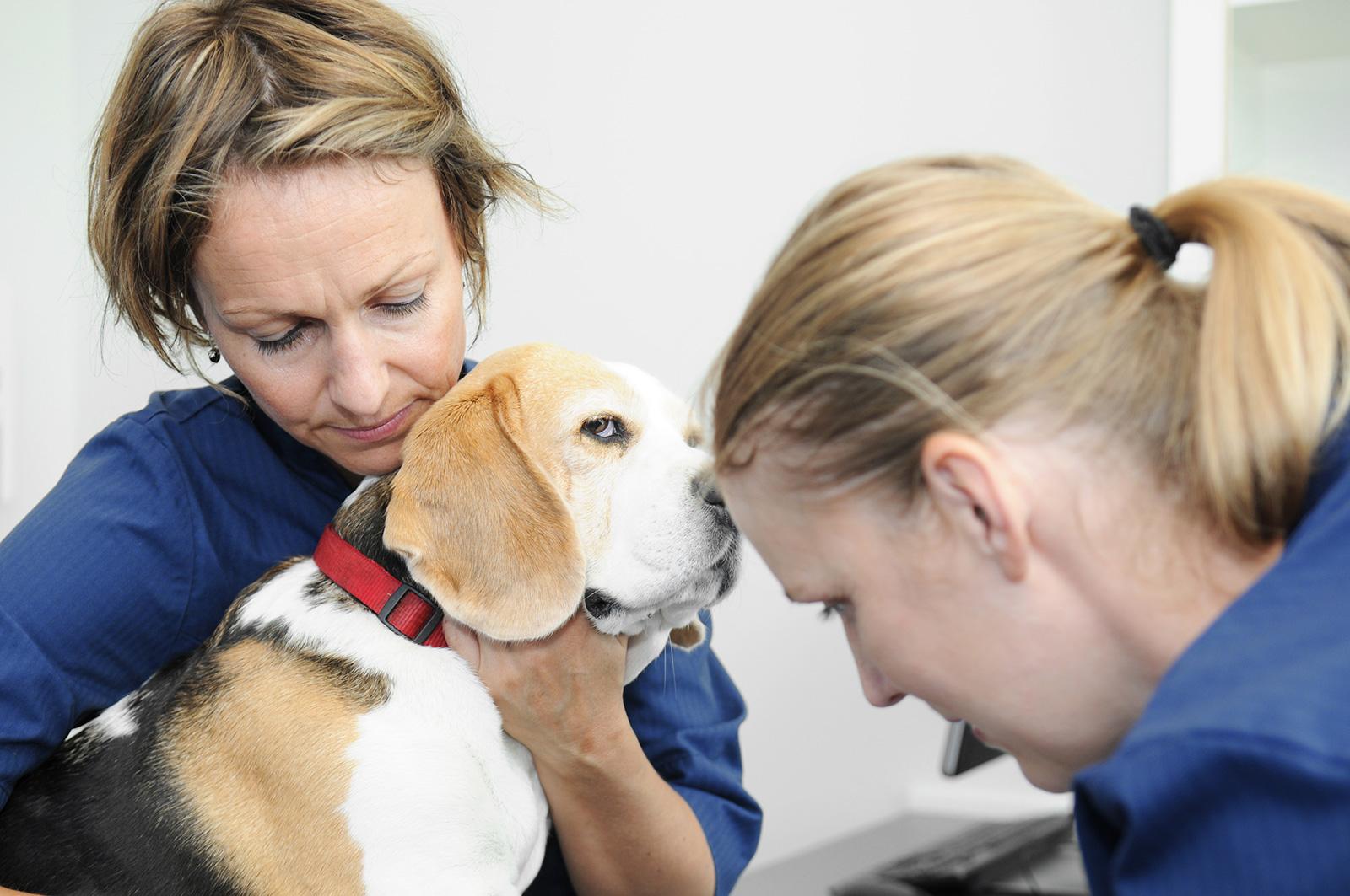hund_dyrehospital