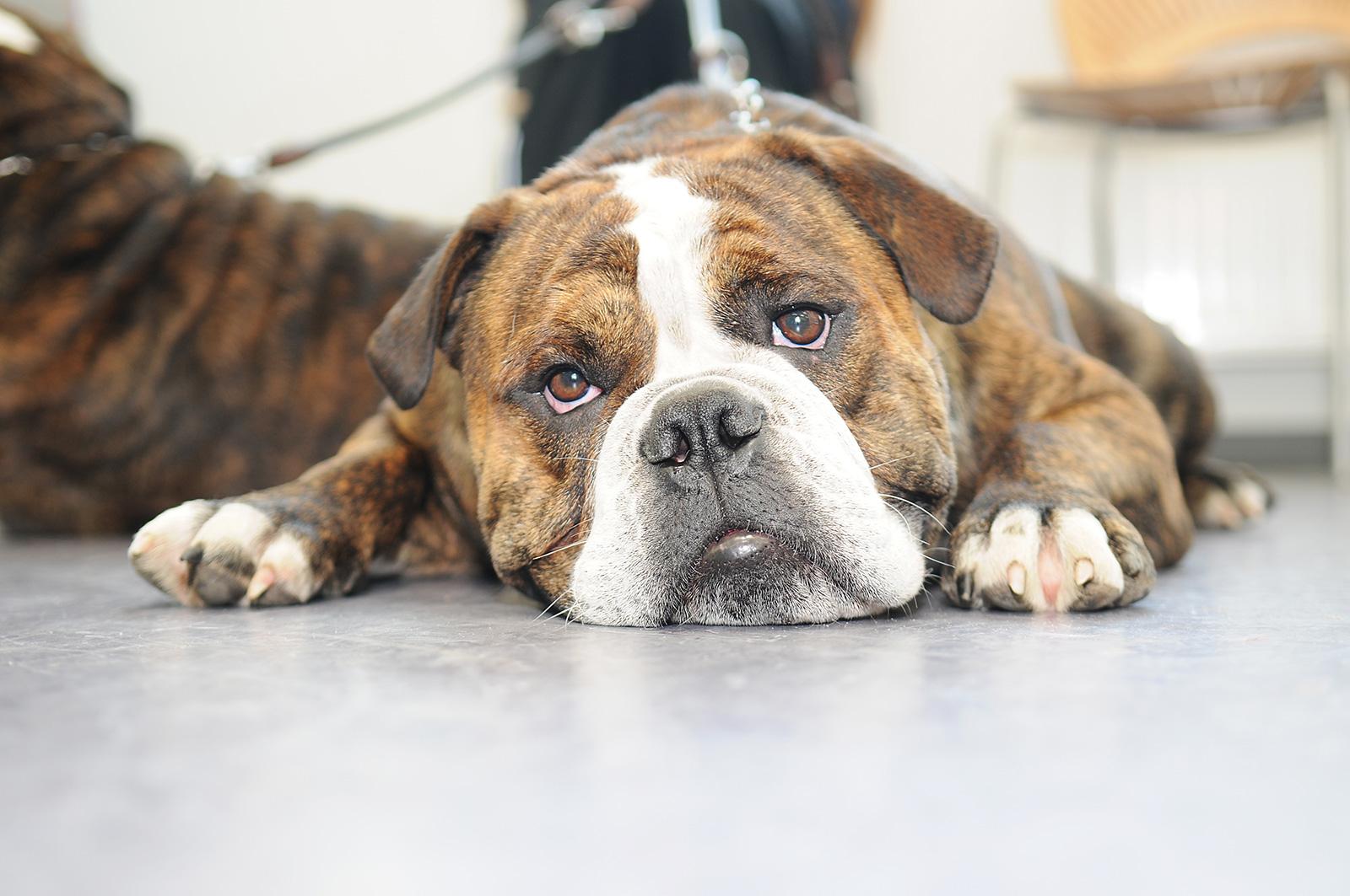 hund_haderslev_dyrehospital