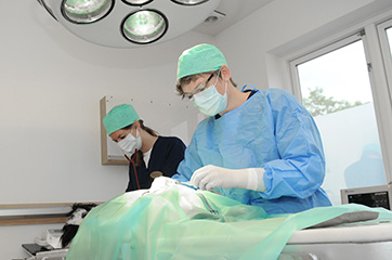 Operation hund