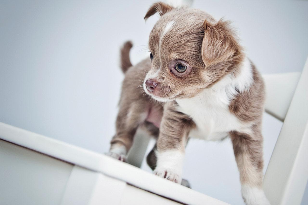 Hundehvalp på Haderslev Dyrehospital